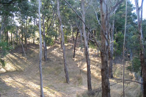 the back of our property... otherwise known as 'the walking track'