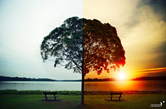 (achew *Bokehmon*) Tags: sunset tree photoshop photography singapore fake comparison edit cosmetic selatar cookedvsuncook
