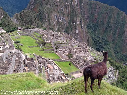 Llama surveyor