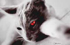 "Joy ""EVIL"" (DM8943) Tags: new red orange cats brown macro cat wow dark feel joy evil special soul horror devil feeling sight 2009 darkred wooow woow 2011 dm8943"
