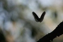 Butterfly (dipankar_c) Tags: trip konkan