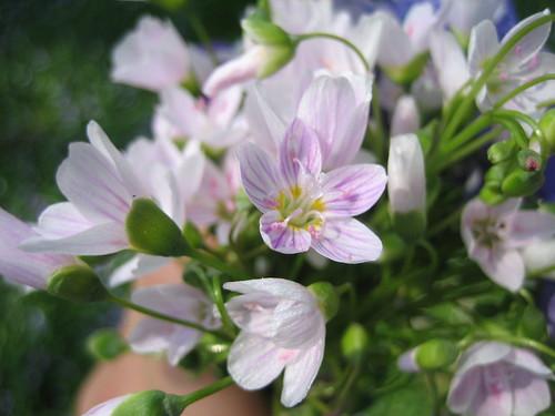 4.26.08 Flowers 012