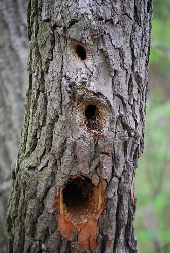 tree DSC_6999