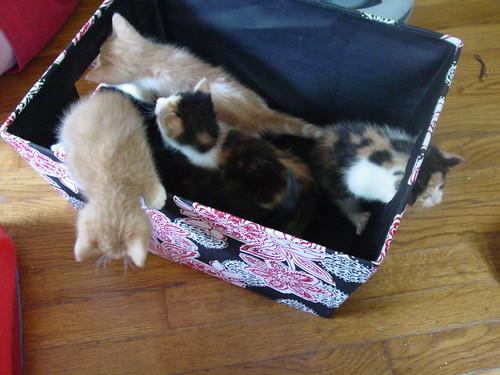 Em's kittens