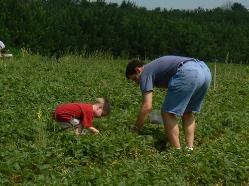 The boys begin picking