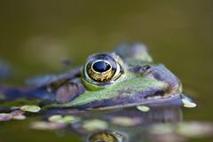 [Foto: Frog]