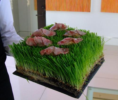 Kobe beef cheesecake