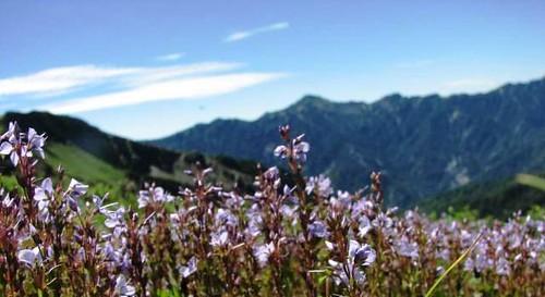 滿山遍野的花