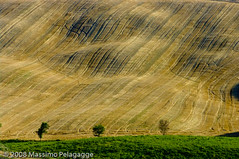 Luglio in Toscana (Massimo Pelagagge) Tags: italy panorama tree verde primavera landscape landscapes spring bravo europa europe italia country hill campagna tuscany campo toscana terra 2008