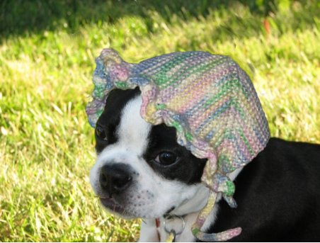 bonnet_on_dog