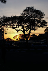 (Rafael Coelho Salles) Tags: sunset pordosol brazil tree brasil backlight contraluz airplane photographer saopaulo professional sampa sp aviao arvore professionalphotographer fotografo profissional degrade rscsales fotografoprofissional rscsalles rscsallescom
