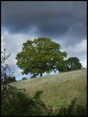 Thursday walk 2 Oct 08 (Mr_Chips) Tags: tree utata thursdaywalk utata:project=tw129