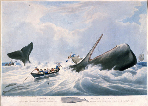 South Sea Whale Fishery