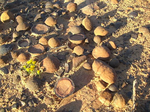 Moqui Marbles (hematite concretions) lying upon the ground