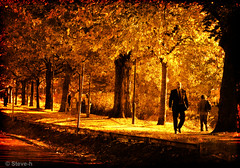 Autumn gold (Steve-h) Tags: bridge autumn trees ireland people dublin woman brown black men leaves gold shadows textures finepix fujifilm railing 1001nights soe grandcanal towpath litterbin gbr ogm ghostbones steveh ghostworks platinumphoto anawesomeshot colorphotoaward superaplus aplusphoto visiongroup favemegroup4 favemegroup7 colourartaward platinumheartaward proudshopper theperfectphotographer spiritofphotography multimegashot s100fs qualitypixels favemoifrance tatot vision100