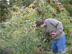 Shelburne Farm (leahliz) Tags: fall shelburnefarm stephen apples applepicking stowema