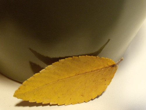 yellow leaf on my windowsill