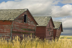 Falling Down (sminky_pinky100 (In and Out)) Tags: canada rural landscape countryside decay farm farming barns alberta ruraldecay sheds fallingdown personalbest justonelook 5photosaday abigfave omot platinumphoto eyejewel amazingalberta