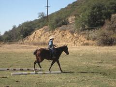 IMG_2145 (ss1442) Tags: horse vaquero