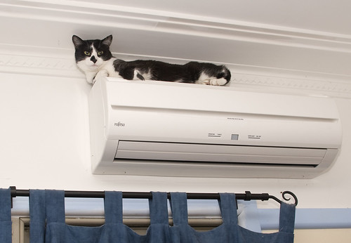 Joey on an air conditioner
