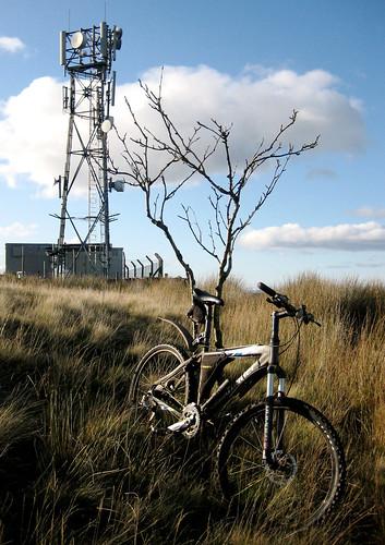 Goldenberry mast