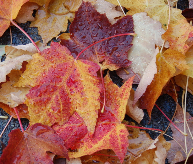 autumn_leaves_colors_sides_drops