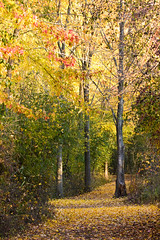 Nature Trail In Fall