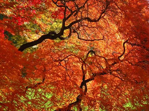 フリー画像| 自然風景| 樹木の風景| 紅葉|        フリー素材|