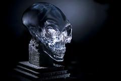 Crystal Skull - Foto di Roberto Corralo
