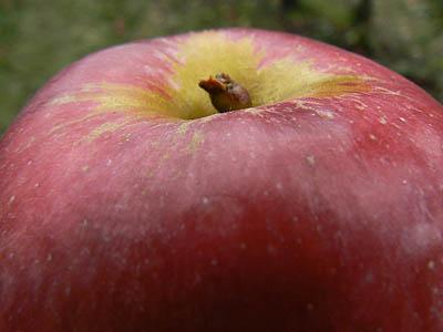 pomme rouge.jpg