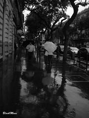Piove sui miei alibi.. (Blackmuse) Tags: street reflection rain umbrella walking grey drops strada grigio budapest pioggia riflesso gocce camminare cupo ombrelli camminando