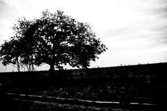 BR 242 (Roberta Smania) Tags: pb paisagem viagem br242
