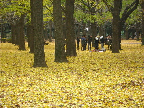 Photo shoot at Yoyogi Park