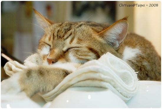 [台北]Cat。極簡咖啡-溫睡。咖啡杯