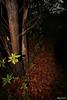 alone in the middle of the darkness (Nouf Alkhamees) Tags: tree canon alone darkness kuwait middle alk nono مركز وسط alkuwait الكويت الظلام nouf وحيد العمل كانون نوف التطوعي نونو kvwc