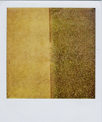 concession (Claire Marie Vogel) Tags: flowers brown flower green grass yellow marie vintage square polaroid sx70 claire sand different ground line dirt faded half getty instant parallel 70 vogel concession compromise settle sx agreement seperated seperate