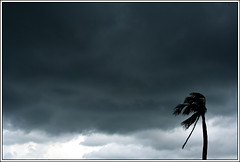 The tempest [..Narayanganj, Bangladesh..] (Catch the dream) Tags: storm tree nature leaves clouds wind menacing hurricane bongo disaster layers tempest gush cyclone bangladesh fury menace loom calamity turbulence gust bengali bangladeshi loomingclouds narayanganj adamjee unidirectional gettyimagesbangladeshq2