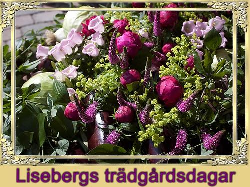 Blommor (127 av 365 )