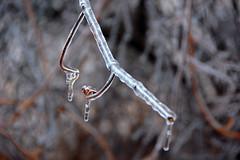 DSC_0055 (setao86) Tags: winter snow macro ice landscape frozen spring scenery frost icesickles
