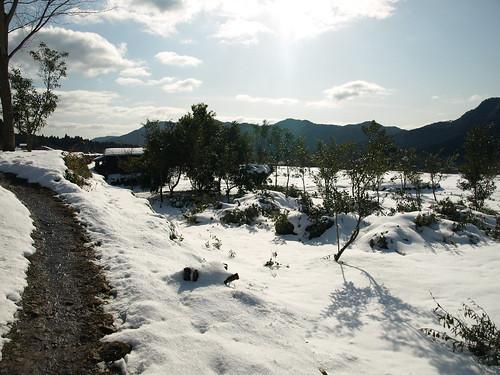 雪の大原 (4)