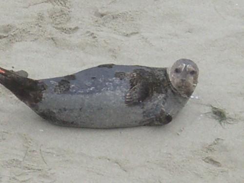 seal beach. quot;seal beach, LaJollaquot;