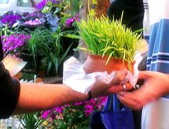 (Mahsa Z) Tags: green nowruz noruz nowrouz  13