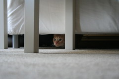 IMG_0004 (Erik Stronks) Tags: cat henk