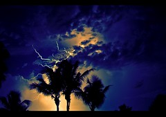 electric palms  - VoxEfx (Vox Efx) Tags: vacation storm color tree clouds lomo fuji adobephotoshop palm saturation strike caribbean lightning turksandcaicos voxefx adobelightroom goldstaraward digitalfaux