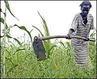 Agricultura en el tercer mundo