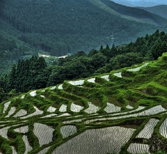 (whc7294) Tags: japan ricefield hdr photomatix 10faves   aplusphoto superhearts lunarvillage  colourartaward platinumheartaward  7mosaichalloffame