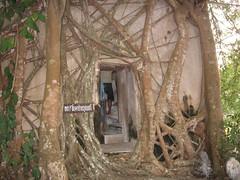 Hidden Window at Wat Bang Kung