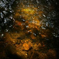 Sunken treasure (Lucky Poet) Tags: light water square scotland edinburgh clear 55mm discarded liquid ringpull waterofleith