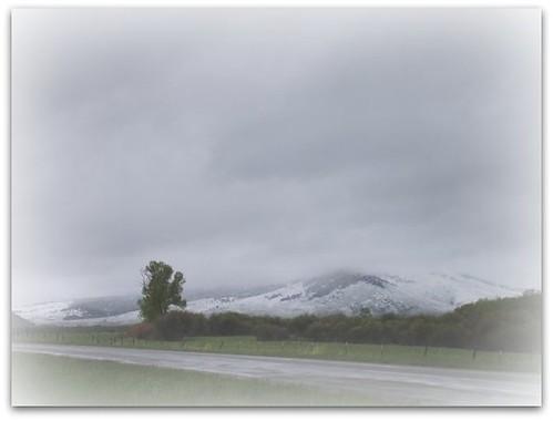 Montana June