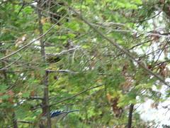 Inverhuron Provincial Park (Raptureboi) Tags: park camping camp ontario bruce parks trailer pinery provincial grandbend inverhuron tiverton provincialparks ontarioparks